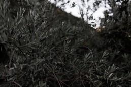 Hameau de Valouse - Atelier Lilas Wood fleuriste mariage Drôme et Drôme Provençale, fleuriste mariage Valence, fleuriste mariage Avignon, fleuriste mariage Aix en Provence, fleuriste mariage Montélimar, fleuriste mariage Auvergne Rhône Alpes & Provence Alpes Côte d'Azur. Photographe : Julien Navarre